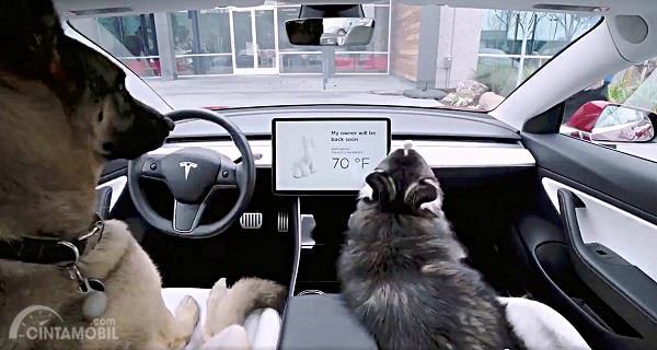 Berawal dari Cuitan Twitter, Tesla Kembangkan Fitur Baru Dog Mode