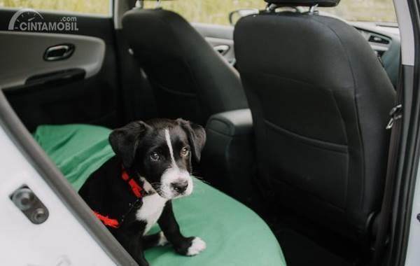 anjing duduk di dalam mobil