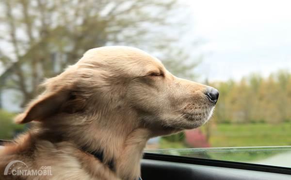 anjing diperjalanan