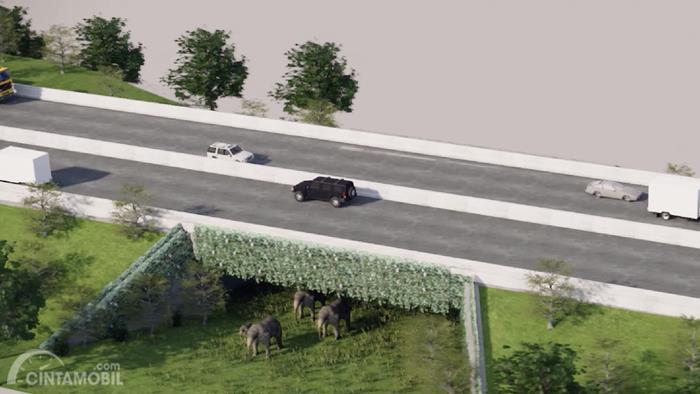 Foto rencana underpass Tol Pekanbaru-Dumai untuk pelintasan gajah