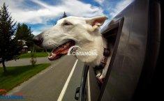 Persiapan Membawa Hewan untuk Perjalanan Jauh Selama Mudik