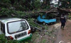 Bukan Hanya Banjir, Waspadai Juga Pohon Tumbang