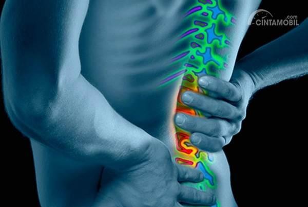 struktur nyeri tulang belakang manusia